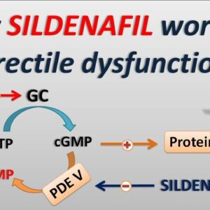 How Sildenafil works in Erectile dysfunction?
